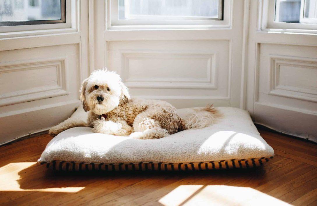 Large Size of Hunde Bett Hundebett Test Empfehlungen 02 20 Petmeister Lifetime Billerbeck Betten überlänge Zum Ausziehen 120x190 Bambus Modernes 180x200 120 X 200 160x200 Bett Hunde Bett