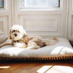 Hunde Bett Bett Hunde Bett Hundebett Test Empfehlungen 02 20 Petmeister Lifetime Billerbeck Betten überlänge Zum Ausziehen 120x190 Bambus Modernes 180x200 120 X 200 160x200