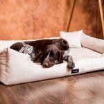 Hunde Bett Bett Hunde Bett Orthopdisches Hundebett Pluto Visco Velours Tierlando Günstige Betten Stauraum 200x200 Luxus Mit Matratze Und Lattenrost 140x200 Sonoma Eiche
