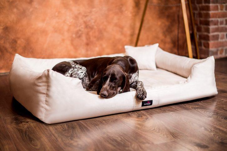Medium Size of Hunde Bett Orthopdisches Hundebett Pluto Visco Velours Tierlando Günstige Betten Stauraum 200x200 Luxus Mit Matratze Und Lattenrost 140x200 Sonoma Eiche Bett Hunde Bett