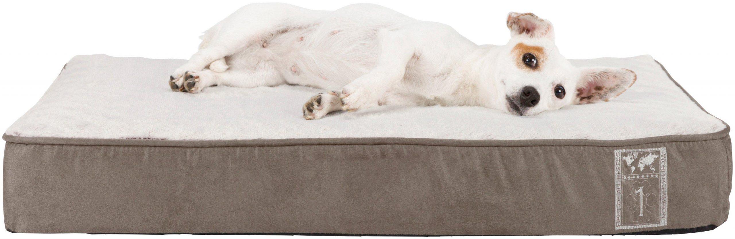 Full Size of Hunde Bett Hundebett Flocke Zooplus Kaufen Wolke Holz Hundebettenmanufaktur 125 Auto 120 Cm Trixie Vital Best Of All Breeds Grau Sitzbank Kinder Hasena Bett Hunde Bett