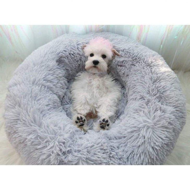 Medium Size of Gemtliches Hundebett Haustierglck Bett Mit Schreibtisch Weiss 160x220 90x190 Hasena Betten Somnus 140x200 Stauraum Wohnwert Kaufen Hunde Tatami Rutsche Bett Hunde Bett
