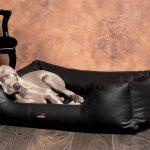 Hunde Bett Hundebett Flocke Erfahrungen Zooplus 90 Cm 125 Xxl Rund 120 Orthopdisches Milen Kunstleder Fr Allergiker Tierlando 200x180 Rausfallschutz 140x220 Bett Hunde Bett