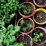 Kräutergarten Küche Küche Various Organic Vegetables Garden In House Area.