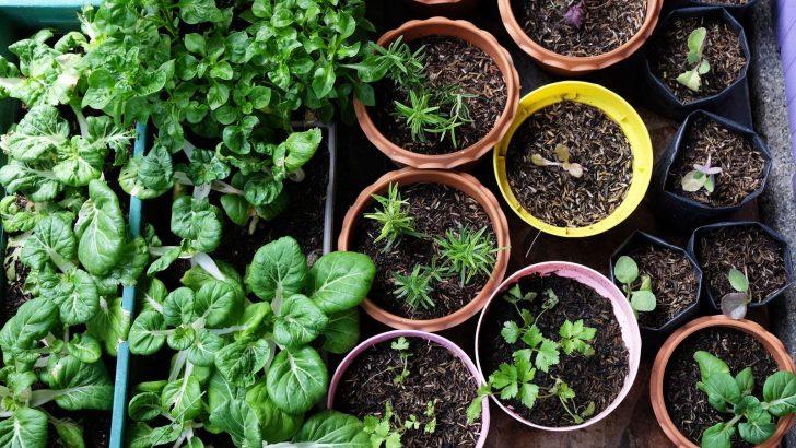 Medium Size of Various Organic Vegetables Garden In House Area. Küche Kräutergarten Küche