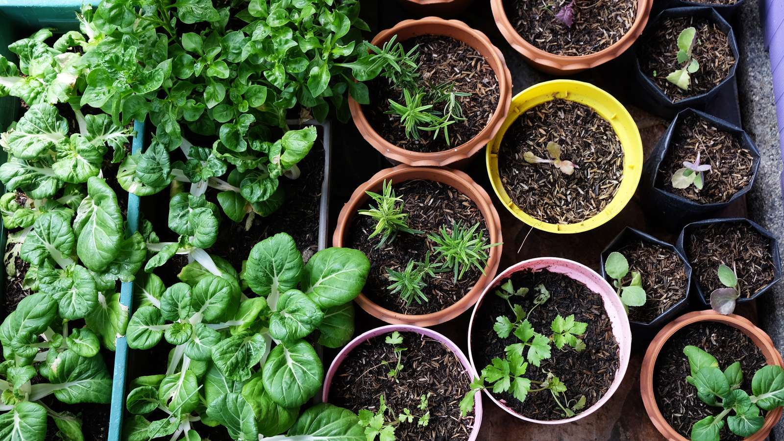 Full Size of Various Organic Vegetables Garden In House Area. Küche Kräutergarten Küche