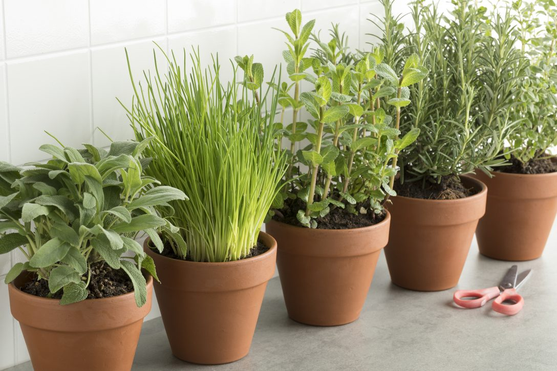 Large Size of Row Of Brown Terracotta Pots With Fresh Herbs Küche Kräutergarten Küche