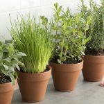 Kräutergarten Küche Küche Row Of Brown Terracotta Pots With Fresh Herbs