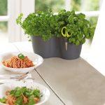 Kräutertopf Küche Kräutertöpfe Küche Ikea Kräutertopf Küche Wand Kräutertöpfe Küche Wand Küche Kräutertopf Küche