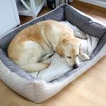 Hundebett Wolke Flocke 125 Cm Bitiba Erfahrungen Test Nhanleitung Nhen In 3 Gren Ikarusdoodle Hundeleinen Bett 100x200 Weißes 160x200 Hunde Prinzessinen Bett Hunde Bett