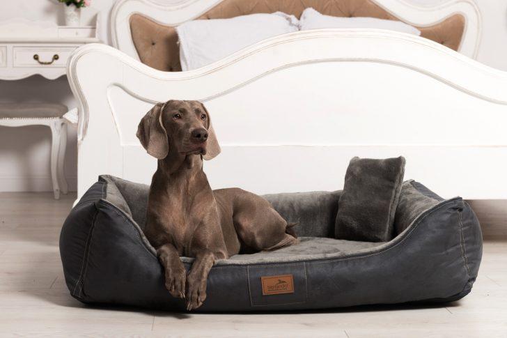 Medium Size of Hunde Bett Hundebett Flocke Xxl 125 Cm Erfahrungen Hundebettenmanufaktur Auto 90 Test Kunstleder Kaufen Zooplus 120 Holz Bitiba Ultraweiches Orthopdisches Bett Hunde Bett