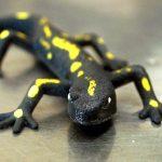 Salamander Küche Küche Salamander Küche Kaufen Salamander Küche Gebraucht Salamander Küche Bartscher Salamander Küche Privat