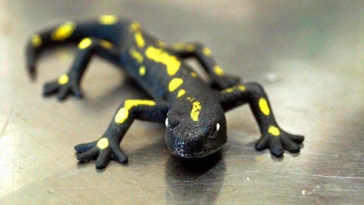 Medium Size of Salamander Küche Kaufen Salamander Küche Gebraucht Salamander Küche Bartscher Salamander Küche Privat Küche Salamander Küche