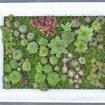 Vertikal Garten Garten Vertikal Garten Diy Mit Sukkulenten Bepflanzter Bilderrahmen Vertikaler Sichtschutz Wpc Bewässerungssysteme Test Bewässerungssystem Schwimmingpool Für Den