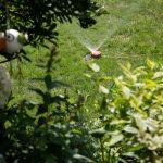 Bewässerungssystem Garten Rasenbewsserung Im Sommer Besten Systeme Welt Gartenüberdachung Liegestuhl Vertikaler Beistelltisch Feuerstellen Loungemöbel Holz Garten Bewässerungssystem Garten