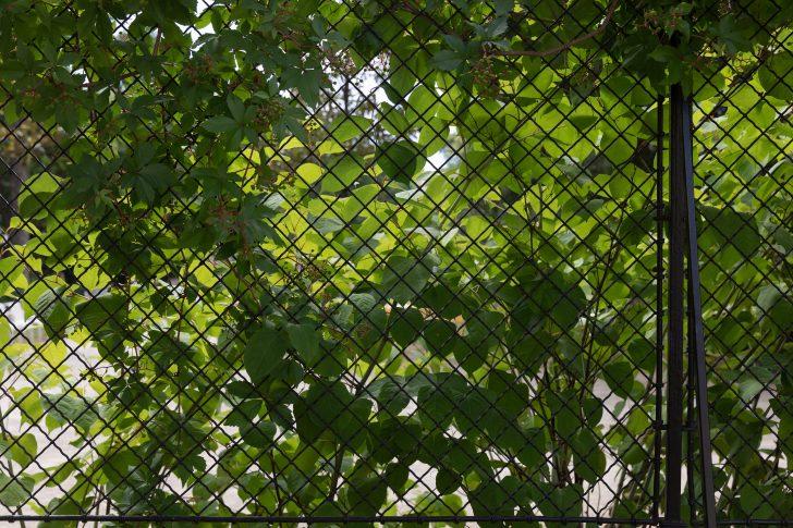 Medium Size of Filepalais Schnborn Volkskundemuseum Wien 2018 Garten Zaun 1jpg Spielhaus Sitzbank Trampolin Relaxsessel Bewässerung Fussballtor Pavillion Sitzgruppe Holzhaus Garten Garten Zaun