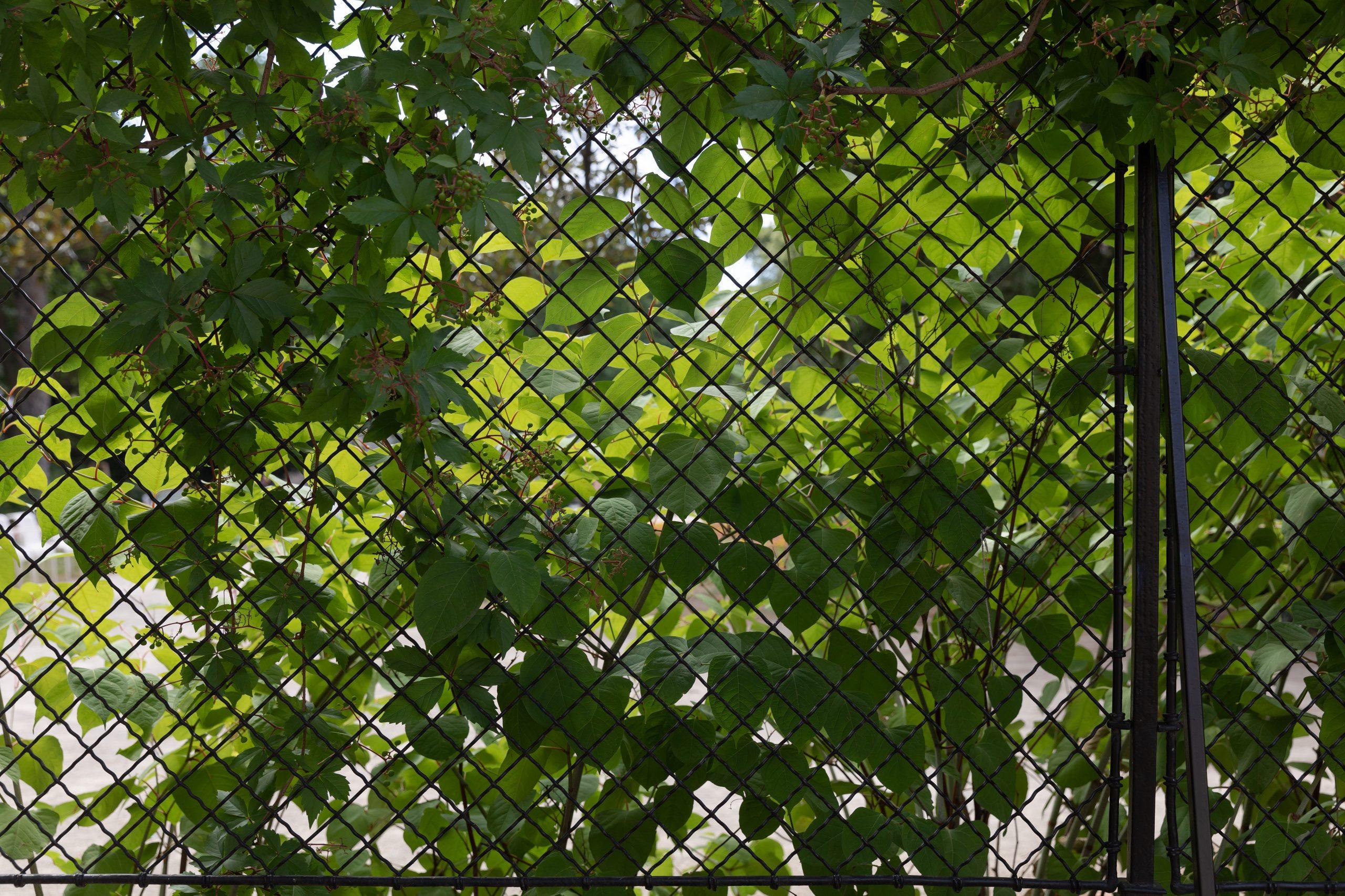 Full Size of Filepalais Schnborn Volkskundemuseum Wien 2018 Garten Zaun 1jpg Spielhaus Sitzbank Trampolin Relaxsessel Bewässerung Fussballtor Pavillion Sitzgruppe Holzhaus Garten Garten Zaun