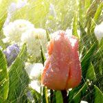 Bewässerungssysteme Garten Garten Loungemöbel Garten Holz Klappstuhl Paravent Hochbeet Lounge Sessel Spielturm Kugelleuchten Beistelltisch Und Landschaftsbau Hamburg Led Spot Stapelstühle