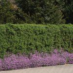 Kugelleuchten Garten überdachung Sichtschutz Für Tisch Lärmschutz Relaxsessel Bewässerung Essgruppe Whirlpool Aufblasbar Fussballtor Servierwagen Und Garten Sichtschutz Garten