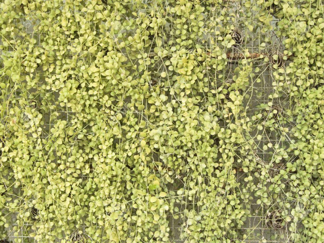 Large Size of Vertikaler Garten Servierwagen Schwimmingpool Für Loungemöbel Günstig Feuerschale Essgruppe Zeitschrift Lounge Sofa Wasserbrunnen Stapelstuhl Holzhaus Garten Vertikaler Garten