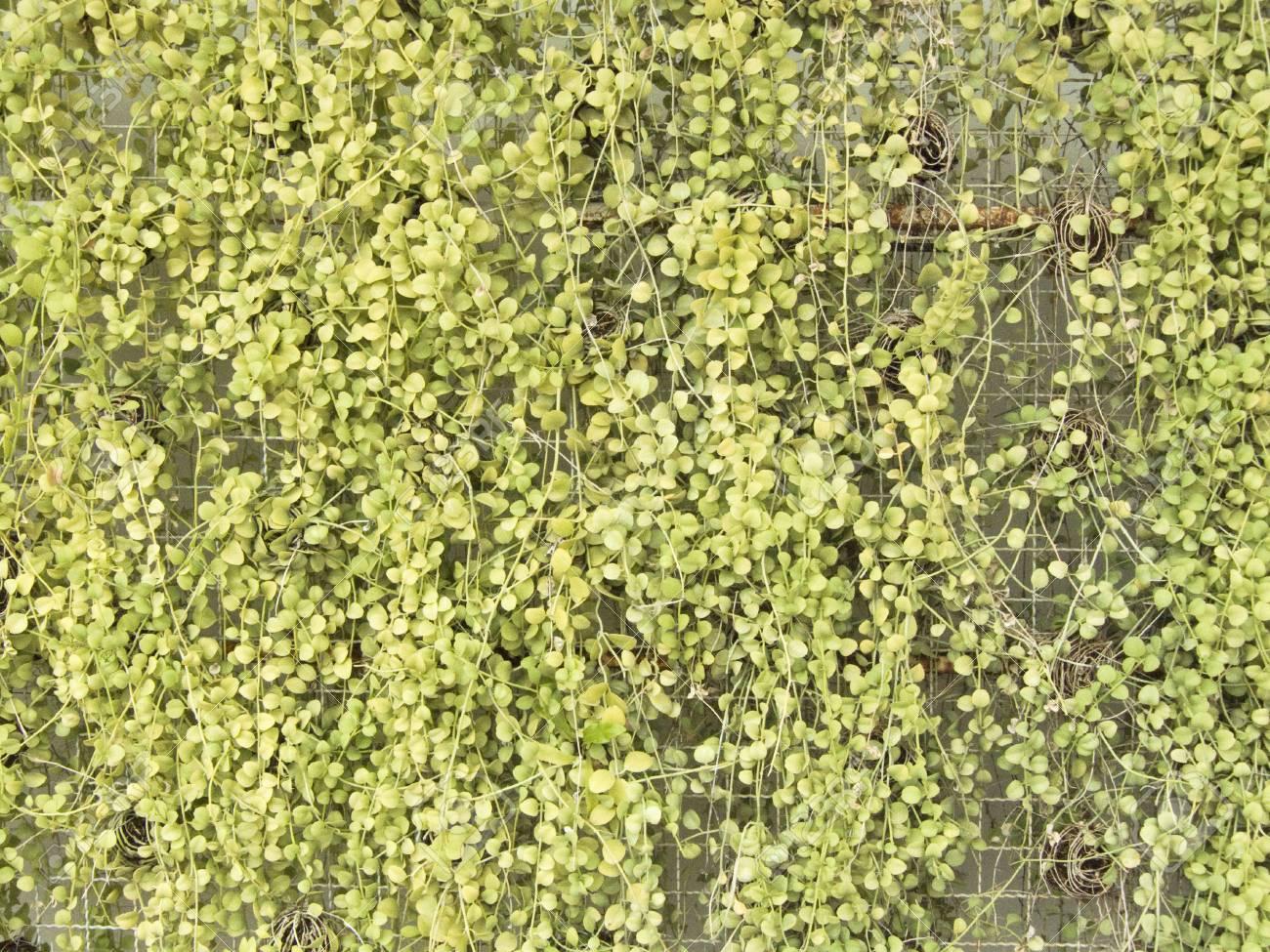 Full Size of Vertikaler Garten Servierwagen Schwimmingpool Für Loungemöbel Günstig Feuerschale Essgruppe Zeitschrift Lounge Sofa Wasserbrunnen Stapelstuhl Holzhaus Garten Vertikaler Garten