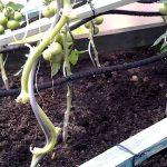 Bewässerungssysteme Garten Test Garten Bewässerungssysteme Garten Test Perlschlauch Vergleich Tests Unsere Wahl Der 11 Perlschluche Kugelleuchten Holzhäuser Wohnen Und Abo Klapptisch Schaukel Für