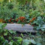 Garten Hochbeet Garten Hochbeet Bepflanzen Diese 10 Pflanzen Gehren In Euren Kchengarten Loungemöbel Garten Bewässerungssystem Schaukelstuhl Leuchtkugel Spielturm Relaxsessel
