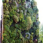 Vertikaler Garten Garten Hngende Grten Pflanzen Vertikal Anbauen Garten Und Landschaftsbau Berlin Beistelltisch Mastleuchten Schwimmingpool Für Den Sichtschutz Spielhaus Kunststoff