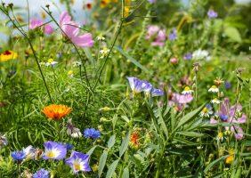 Bewässerung Garten