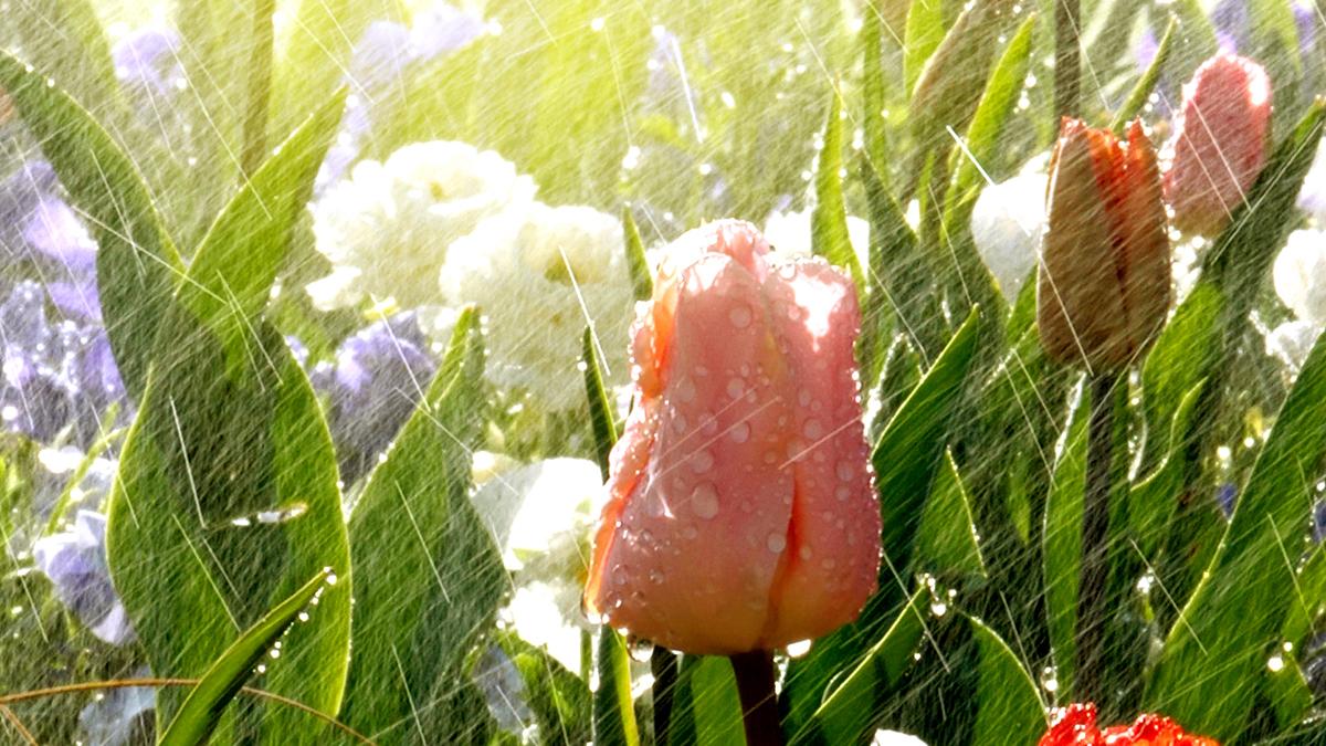 Full Size of Bewsserung Fr Den Garten Automatisch Clever Raintime Nebel Spielhaus Holz Feuerstelle Kandelaber Gartenüberdachung Bewässerung Loungemöbel Stapelstühle Garten Garten Bewässerung Automatisch