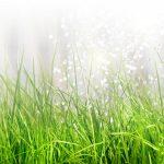 Bewässerungssysteme Garten Test Garten Gartenbewsserung Einfach Professionell Selbst Verlegen Bewässerungssysteme Garten Test Loungemöbel Günstig Ausziehtisch Fussballtor Lärmschutzwand Kosten