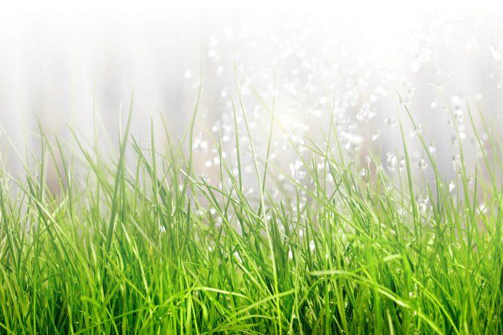 Medium Size of Gartenbewsserung Einfach Professionell Selbst Verlegen Bewässerungssysteme Garten Test Loungemöbel Günstig Ausziehtisch Fussballtor Lärmschutzwand Kosten Garten Bewässerungssysteme Garten Test