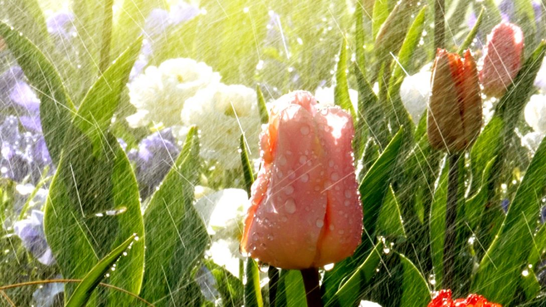 Large Size of Bewsserung Fr Den Garten Automatisch Clever Raintime Nebel Gewächshaus Stapelstuhl Holzhäuser Kinderspielhaus Pavillion Schaukel Für Kandelaber Led Spot Garten Bewässerung Garten