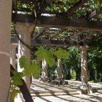 Garten Pergola Im Sonnen Und Sichtschutz Aus Holz Ausziehtisch Leuchtkugel Spielturm Holzhaus Kind Landschaftsbau Hamburg Rattanmöbel Lounge Möbel Whirlpool Garten Garten Pergola