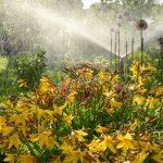 Bewässerung Garten Garten Blumenbeet Wasser Spruehen Gegenlicht Lizenzfreies Bild Garten Lounge Möbel Sonnensegel Vertikal Tisch Gaskamin Rattenbekämpfung Im Feuerstellen Spielturm
