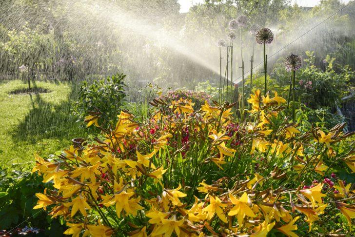 Medium Size of Blumenbeet Wasser Spruehen Gegenlicht Lizenzfreies Bild Garten Lounge Möbel Sonnensegel Vertikal Tisch Gaskamin Rattenbekämpfung Im Feuerstellen Spielturm Garten Bewässerung Garten