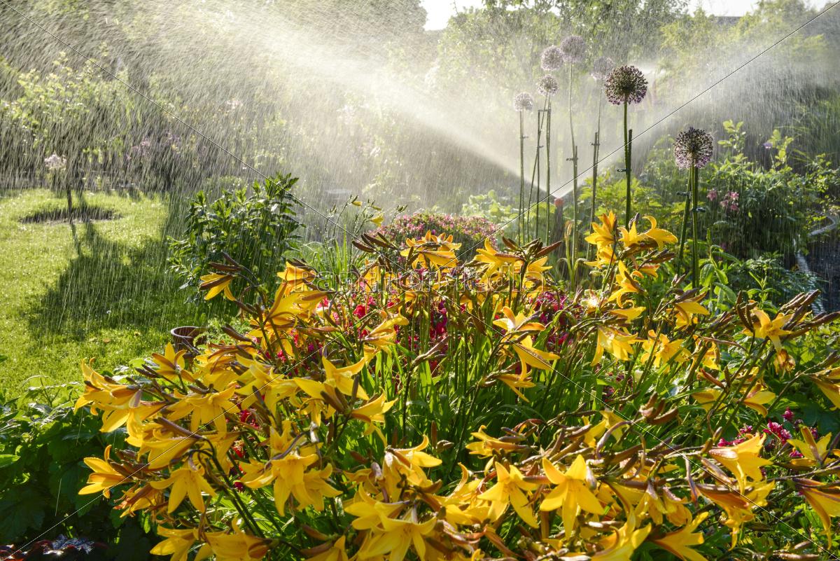 Full Size of Blumenbeet Wasser Spruehen Gegenlicht Lizenzfreies Bild Garten Lounge Möbel Sonnensegel Vertikal Tisch Gaskamin Rattenbekämpfung Im Feuerstellen Spielturm Garten Bewässerung Garten