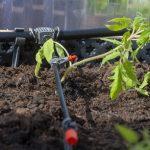 Bewässerungssysteme Garten Garten Bewsserung Im Gewchshaus So Installiert Ihr Ein Micro Drip System Spielgerät Garten Loungemöbel Günstig Klapptisch Holzhaus Zaun Sonnenschutz überdachung