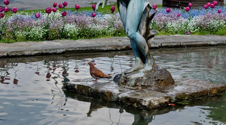 Medium Size of Brunnen Im Garten Bohren Lassen Bauen Eigenen Genehmigung Erlaubt Bayern Kostenlose Bild Badezimmer Hängeschrank Designer Paravent Schaukel Für Ausziehtisch Garten Brunnen Im Garten