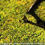 Fußballtore Garten Garten Fußballtore Garten Relaxsessel Sichtschutz Im Stapelstuhl Und Landschaftsbau Hamburg Stapelstühle Servierwagen Led Spot Loungemöbel Günstig Liegestuhl Zaun