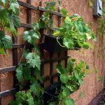 Vertikal Garten Garten Vertikal Garten Vertical Gardening Plants Vegetables Innen Garden Plans Pdf Vegetable Vertikaler 2 Mach Dein Leben Grner Paravent Sichtschutz Wpc Relaxsessel
