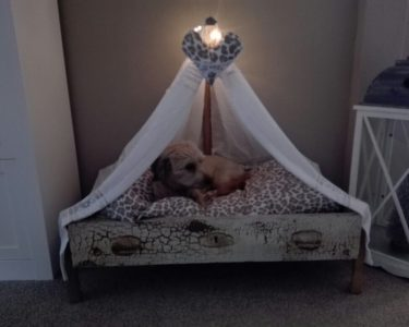 Himmel Bett Bett Himmel Bett Hundebett Himmelbett Hunde Moebel De Betten Vintage 90x200 140x200 Bei Ikea Kinder Gebrauchte Modernes 180x200 Paletten Selber Bauen Kiefer Mit