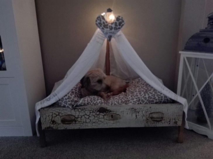 Medium Size of Himmel Bett Hundebett Himmelbett Hunde Moebel De Betten Vintage 90x200 140x200 Bei Ikea Kinder Gebrauchte Modernes 180x200 Paletten Selber Bauen Kiefer Mit Bett Himmel Bett