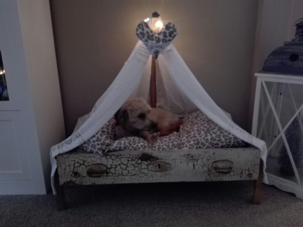Full Size of Himmel Bett Hundebett Himmelbett Hunde Moebel De Betten Vintage 90x200 140x200 Bei Ikea Kinder Gebrauchte Modernes 180x200 Paletten Selber Bauen Kiefer Mit Bett Himmel Bett