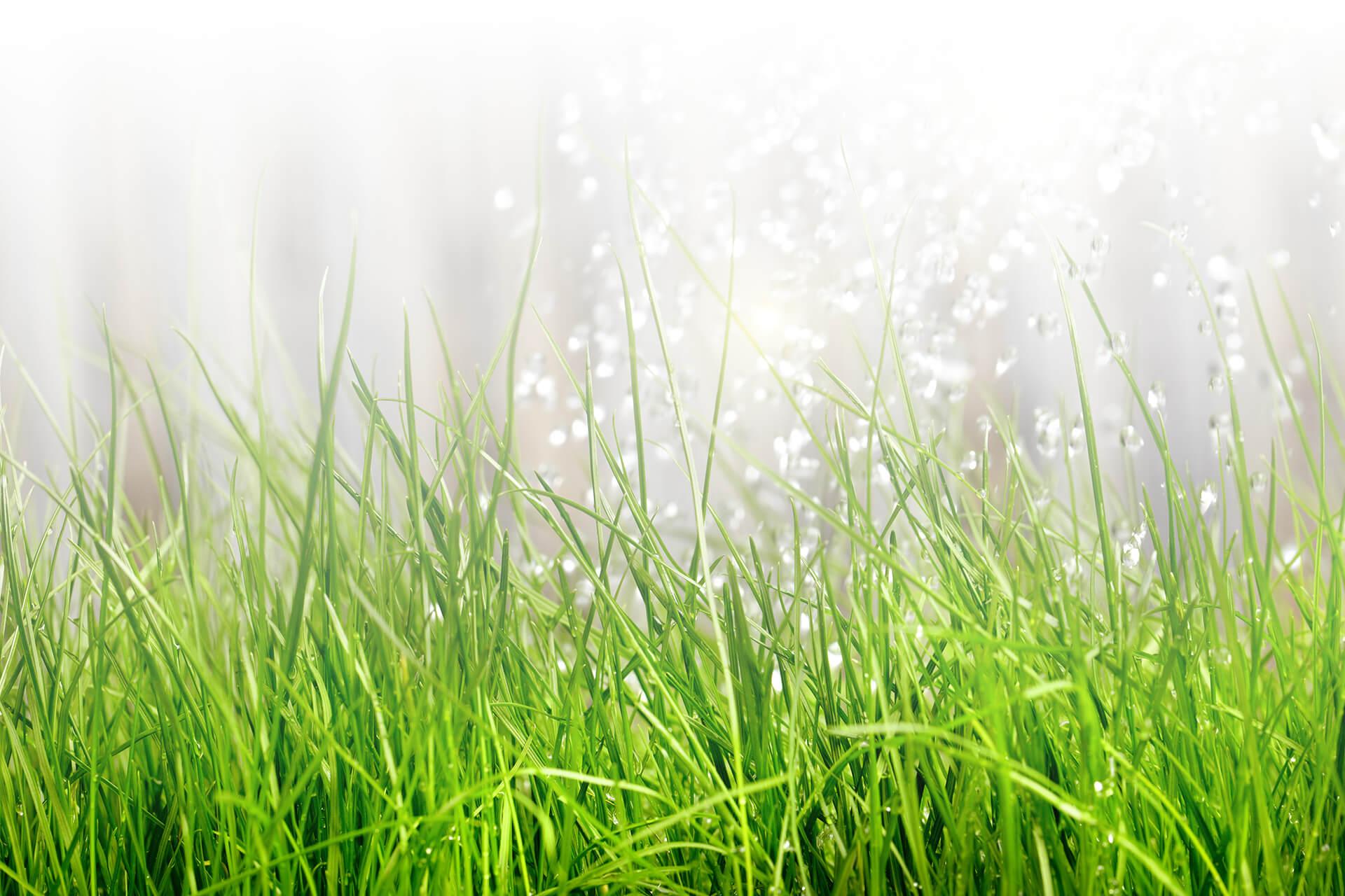 Full Size of Bewässerungssystem Garten Gartenbewsserung Einfach Professionell Selbst Verlegen Schwimmingpool Für Den Klettergerüst Loungemöbel Holz Schallschutz Garten Bewässerungssystem Garten