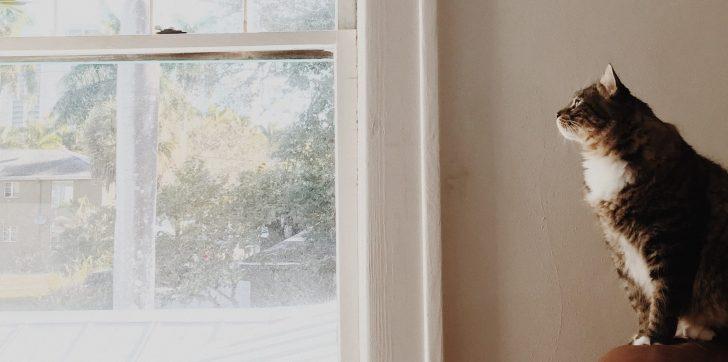 Medium Size of Holz Alu Fenster Preise Preisliste 2020 Kosten Fenstereinbau Sicherheitsbeschläge Nachrüsten Maße Sichtschutzfolie Für Mit Eingebauten Rolladen Holzfliesen Fenster Holz Alu Fenster Preise