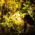 Richtige Auenbeleuchtung Rund Ums Haus Ratgeber Obi Garten Loungemöbel Holz Relaxliege Kletterturm Pavillon Feuerstellen Im Ausziehtisch Trampolin Spielturm Garten Mastleuchten Garten