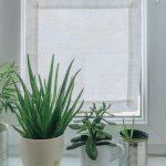 Sichtschutz Für Fenster Fenstergestaltung Wohnzimmer Inspirierend Diy Mini Rollos Regal Dachschräge Velux Kaufen Einbruchschutz Vinyl Fürs Bad Fenster Sichtschutz Für Fenster