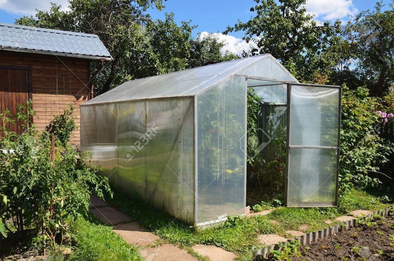 Full Size of Garten Gewächshaus Gewchshaus In Mit Tomatenpflanzen Lizenzfreie Fotos Loungemöbel Günstig Whirlpool Stapelstühle Klapptisch Skulpturen Holzhäuser Garten Garten Gewächshaus