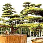 Trennwand Garten Garten Trennwand Garten Holz Obi Sichtschutz Metall Glas Selber Bauen Rost Hornbach Bauhaus Stein Kaufen Kunststoff Anthrazit Ikea Aus Pflanzen Fr Terrasse Luxurytrees